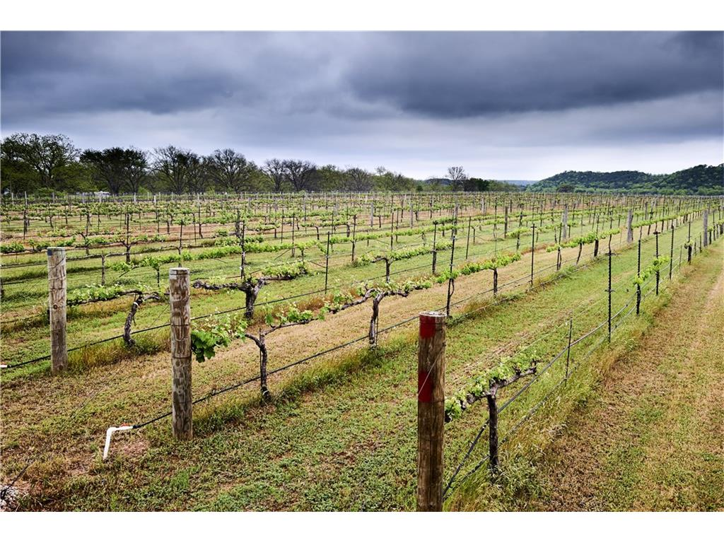 Beautiful productive vineyard on established Texas Winery with 40 acres.