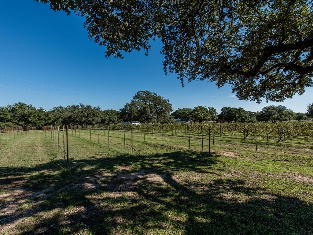 McReynolds vineyard for sale